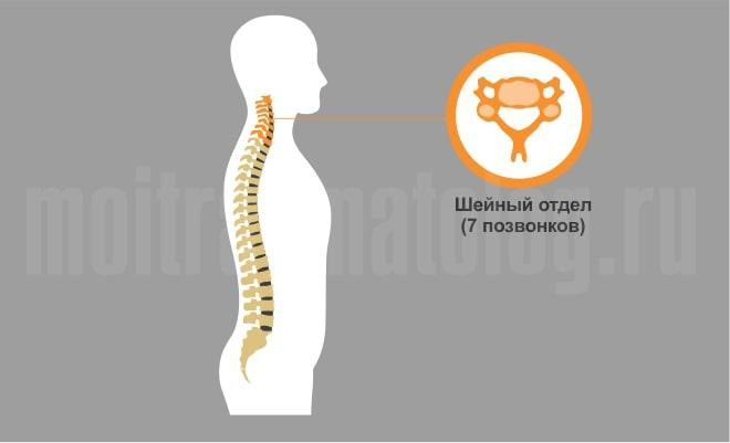 перелом шейного отдела