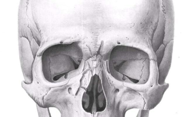 Через сколько заживает нос после перелома. Перелом носа без смещения