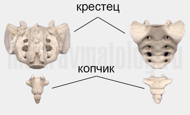 копчик анатомия